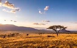 Por do sol em planícies do savana fotos de stock royalty free