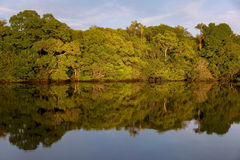 Por do sol em Rio Negro Imagem de Stock Royalty Free