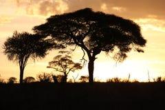 Por do sol em Tarangire foto de stock