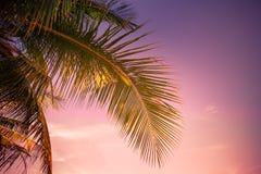 Por do sol em trópicos com palmeiras Imagem de Stock Royalty Free
