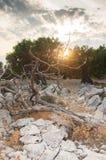 Por do sol em um bosque verde-oliva fotos de stock