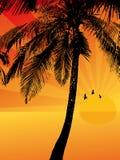 Por do sol em um console tropical Ilustração Royalty Free