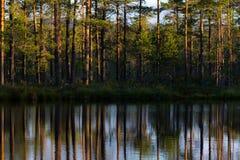 Por do sol em um lago com árvores Foto de Stock Royalty Free