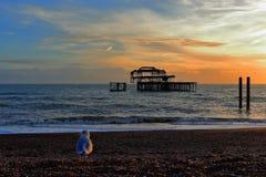 Por do sol em um Pebble Beach em Brigghton, em Brigghton e Hove, East Sussex, Reino Unido imagens de stock royalty free