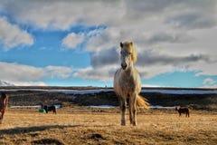 Por do sol em uma estrada vazia em Islândia Imagens de Stock Royalty Free