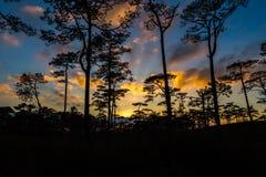 Por do sol em uma floresta do pinho Fotos de Stock Royalty Free