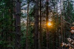 Por do sol em uma floresta nas montanhas na estação atrasada do inverno Fotos de Stock