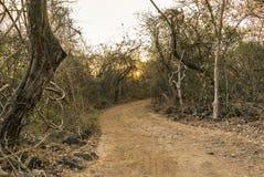 Por do sol em uma floresta seca imagem de stock