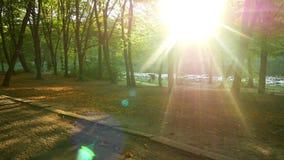 Por do sol ensolarado do parque do outono vídeos de arquivo