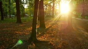 Por do sol ensolarado do parque do outono video estoque