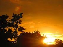 Por do sol entre a árvore Imagens de Stock Royalty Free