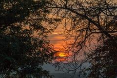 Por do sol entre árvores Fotos de Stock