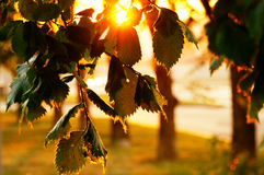 Por do sol entre as árvores no parque Foto de Stock Royalty Free