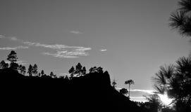 Por do sol entre pinhos, Pilancones, Gran canaria Imagem de Stock Royalty Free