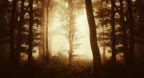 Por do sol escuro da floresta Imagens de Stock Royalty Free
