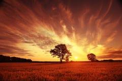 Por do sol fantástico da paisagem no campo de trigo Fotografia de Stock Royalty Free