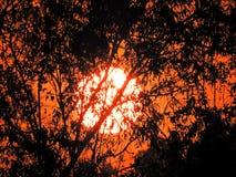 Por do sol fantástico no campo com céu alaranjado fotografia de stock royalty free
