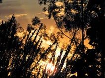 Por do sol fantástico no campo com céu alaranjado fotos de stock