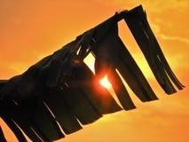 Por do sol fantástico no campo com céu alaranjado foto de stock royalty free