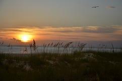 Por do sol, Florida Fotos de Stock