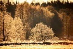 Por do sol gelado imagens de stock