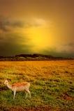 Por do sol glorioso Fotografia de Stock