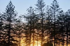 Por do sol glorioso que shinning através das árvores foto de stock royalty free