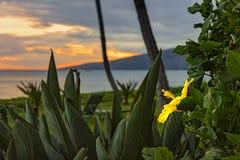 Por do sol Havaí EUA de Maui fotos de stock