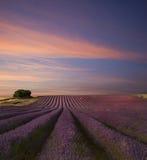 Por do sol impressionante do verão da paisagem do campo da alfazema Imagem de Stock Royalty Free