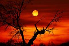 Por do sol inoperante da árvore foto de stock