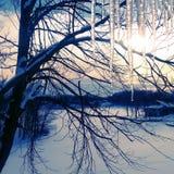 Por do sol do inverno da beira do lago fotografia de stock royalty free