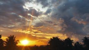 Por do sol do lapso de tempo, nascer do sol na selva, silhuetas da palma, nuvens de cirro brilhantes filme