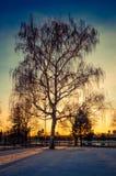 Por do sol majestoso Foto de Stock