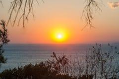 Por do sol morno no mar através das plantas imagem de stock royalty free
