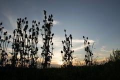 Por do sol mostrado em silhueta Imagens de Stock