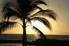 Por do sol mostrado em silhueta palmeira Imagem de Stock