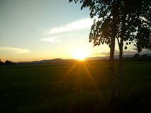 Por do sol na exploração agrícola do arroz em Nan, Tailândia Fotografia de Stock