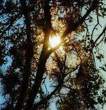 por do sol na floresta Imagem de Stock Royalty Free