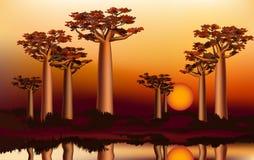 Por do sol na floresta africana do baobab perto do rio 4 Imagem de Stock Royalty Free