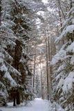 Por do sol na floresta coberto de neve foto de stock royalty free