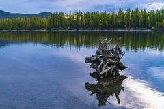 Por do sol na floresta da floresta pelo rio R?ssia fotos de stock royalty free