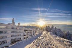 Por do sol na floresta do inverno imagens de stock