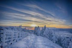 Por do sol na floresta do inverno fotos de stock royalty free