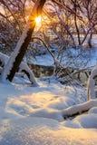 Por do sol na floresta, onde neve pristine e os raios do sol através dos ramos das árvores, foto vertical, Rússia imagem de stock
