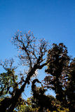 Por do sol na floresta tropical com silhueta da árvore Imagens de Stock Royalty Free