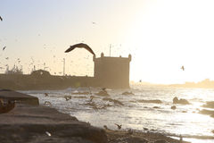 Por do sol na fortaleza de Essaouira, Marrocos imagem de stock royalty free