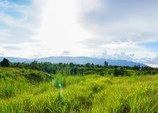 Por do sol na grama dourada da estação das chuvas, verde bonita no w fotos de stock royalty free