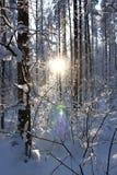 Por do sol na madeira do inverno Imagem de Stock