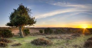 Por do sol na opinião de Bratley na floresta nova Imagem de Stock