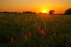 Por do sol na pradaria Imagem de Stock Royalty Free